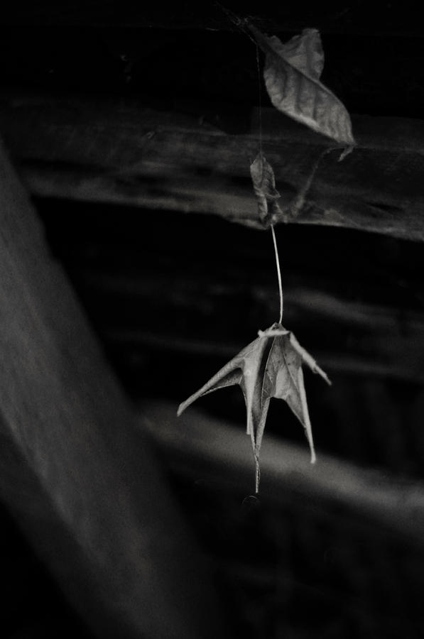 Abandoned House Photograph - Dim Secrets by Rebecca Sherman