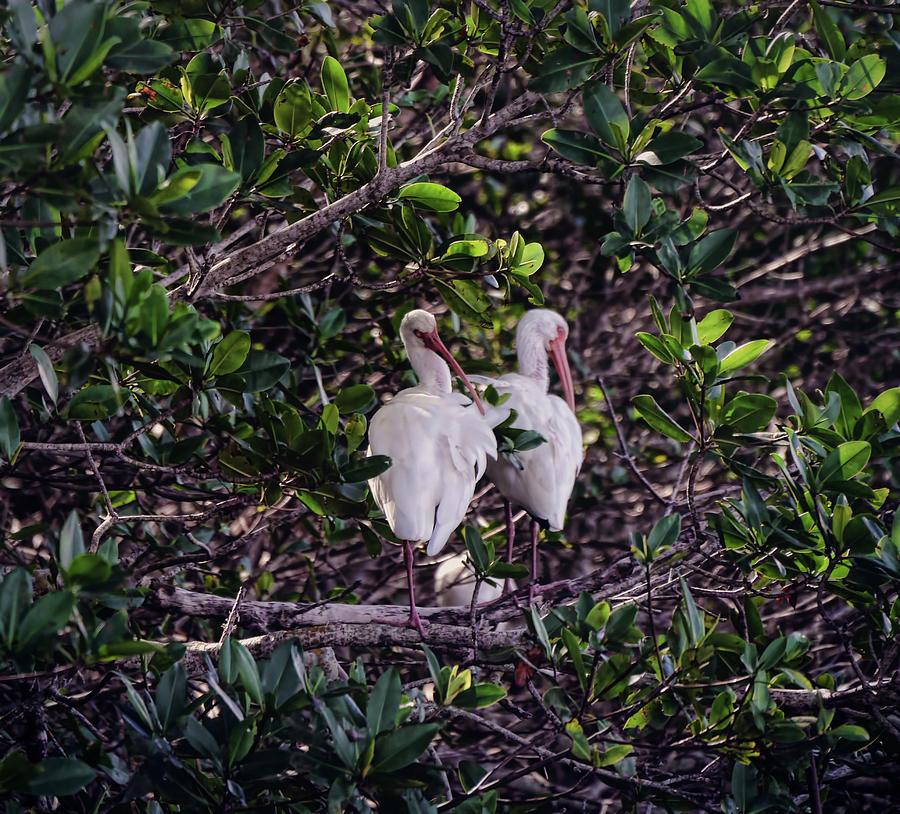 Sanibel Photograph - Ding Darling Wildlife Refuge I by Tina Baxter