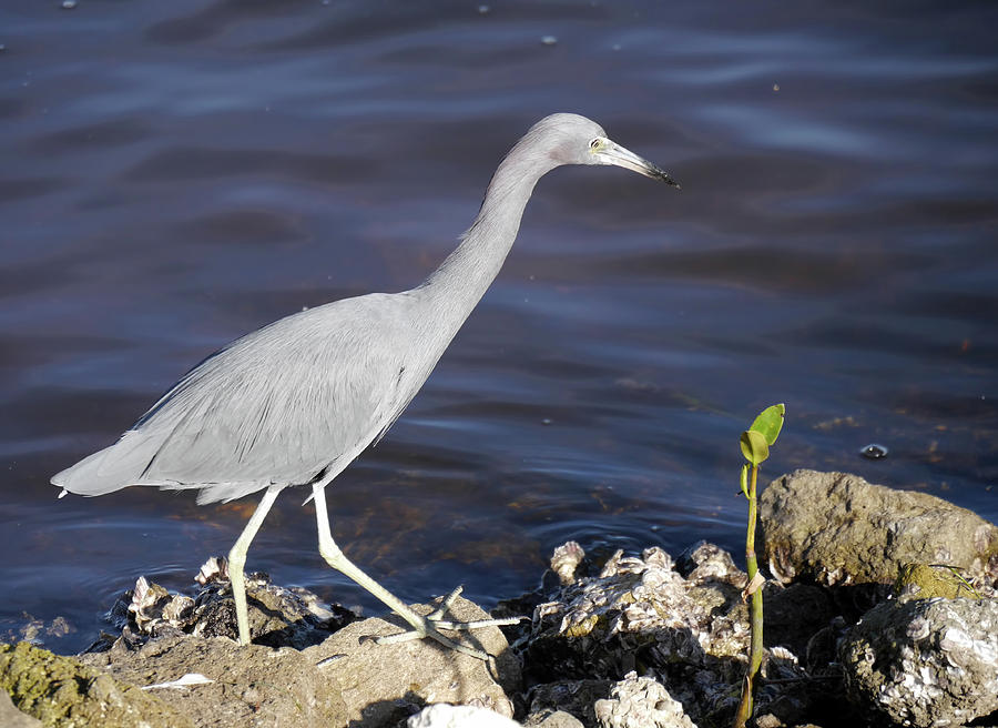 Sanibel Photograph - Ding Darling Wildlife Refuge Vii by Tina Baxter