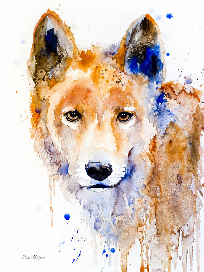 Animal Watercolor Painting - Dingo by Slavi Aladjova