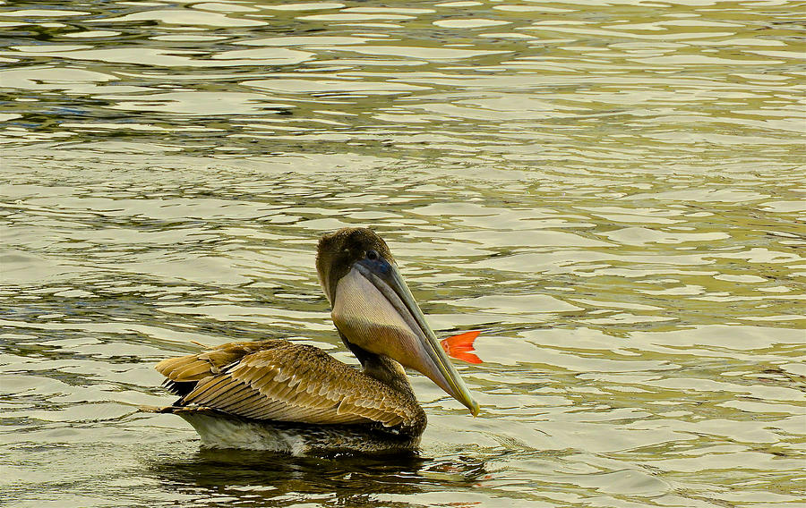 Boats Photograph - Dinnertime by Kathi Isserman