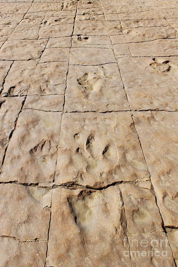 Nature Photograph - Dino Tracks In The Desert 4 by Tonya Hance