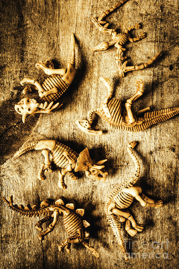 Skeletons Photograph - Dinosaurs In A Bone Display by Jorgo Photography - Wall Art Gallery