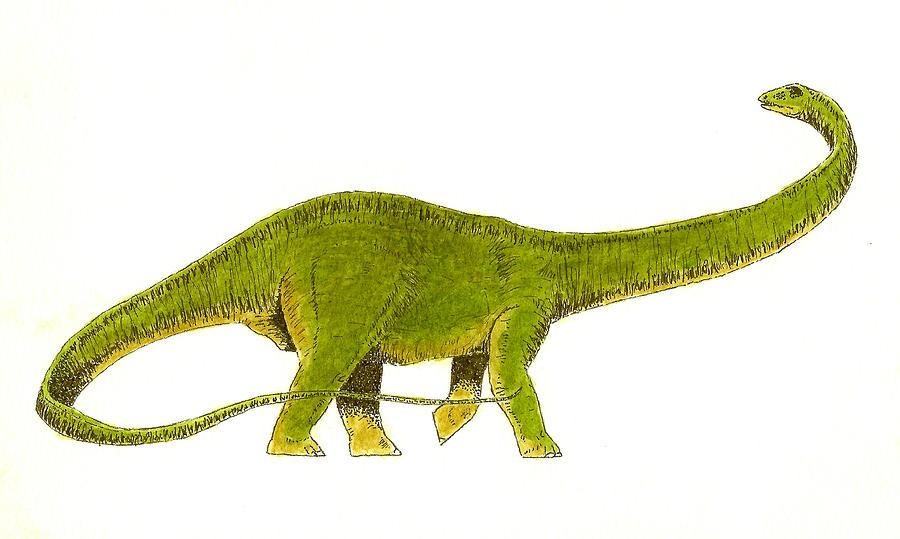 Animals Painting - Diplodocus by Michael Vigliotti