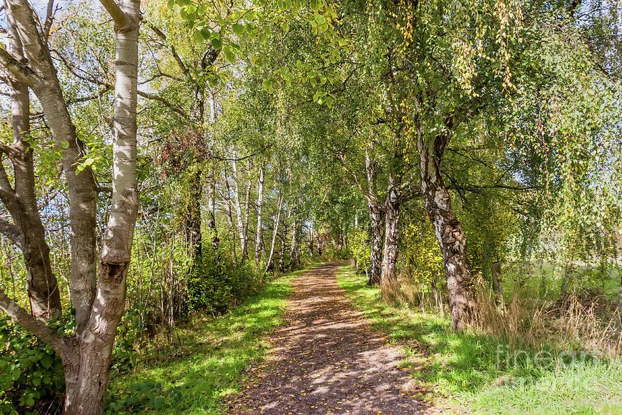 Path Photograph - Dirt Path In A Birch Grove  by Viktor Birkus