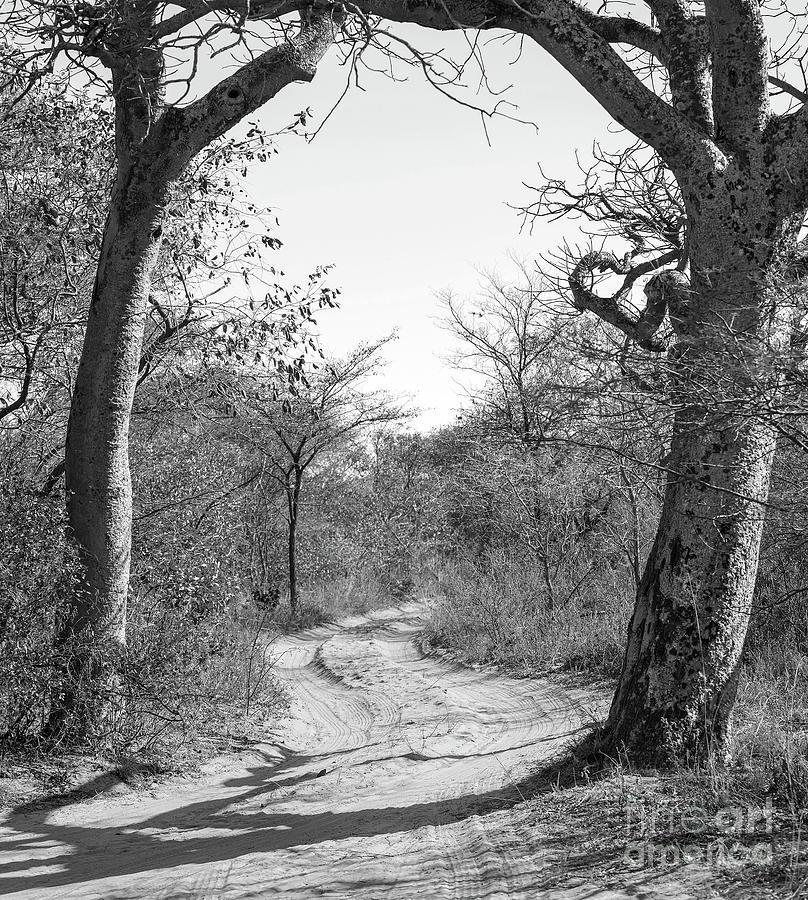 Dirt Road Botswana Black And White Photograph