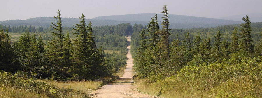 Dirt Road To Dolly Sods Photograph by Joshua Bales