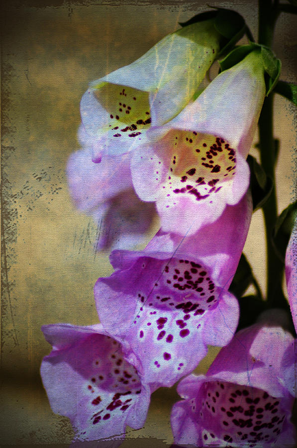 Flowers Photograph - Dirty Belles by Bill Cannon