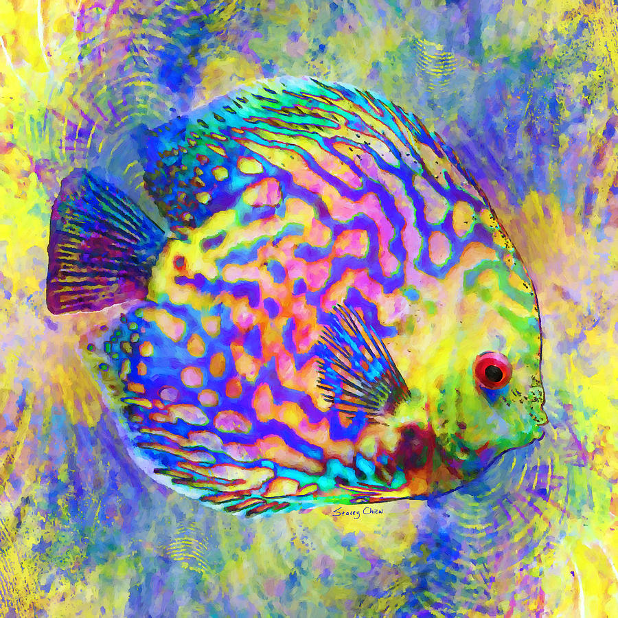 Discus Fish For Sale In Florida