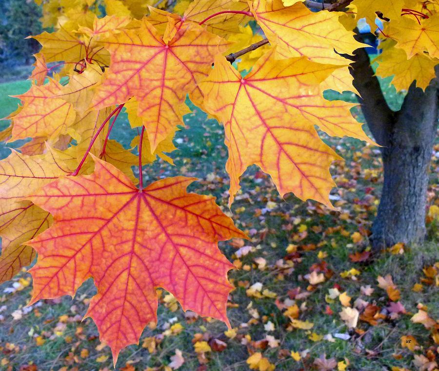 Distinctive Maple Leaves Digital Art