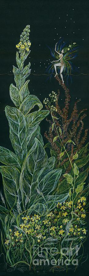 Mullein Drawing - Ditchweed Fairy Mullein by Dawn Fairies