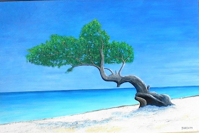 Divi divi tree painting by paul o shaskan - Dive e divi ...
