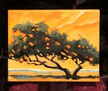 Trees Painting - Dividivi Tree by Don Sibley