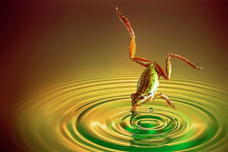 Frog Photograph - Diving by William Freebilly photography