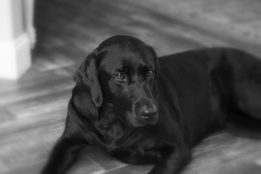 Dixie  by Dead Cypress Photography