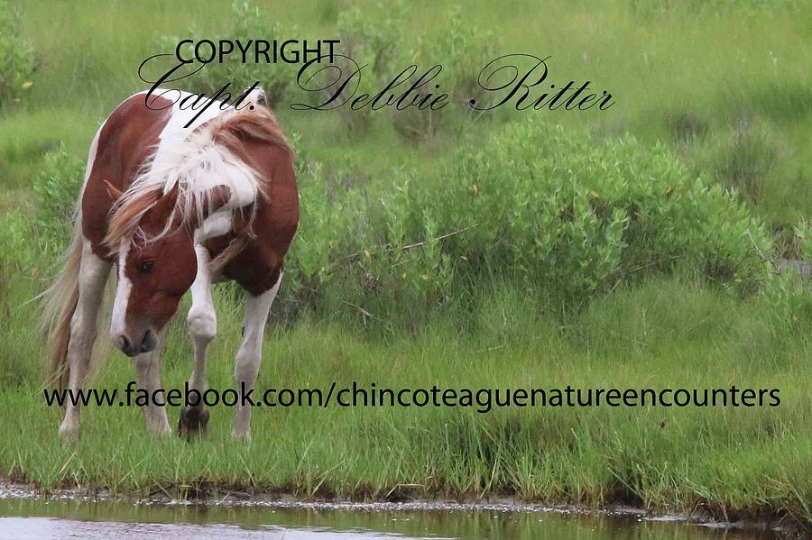Stallion Photograph - DLS Sees Ace by Captain Debbie Ritter