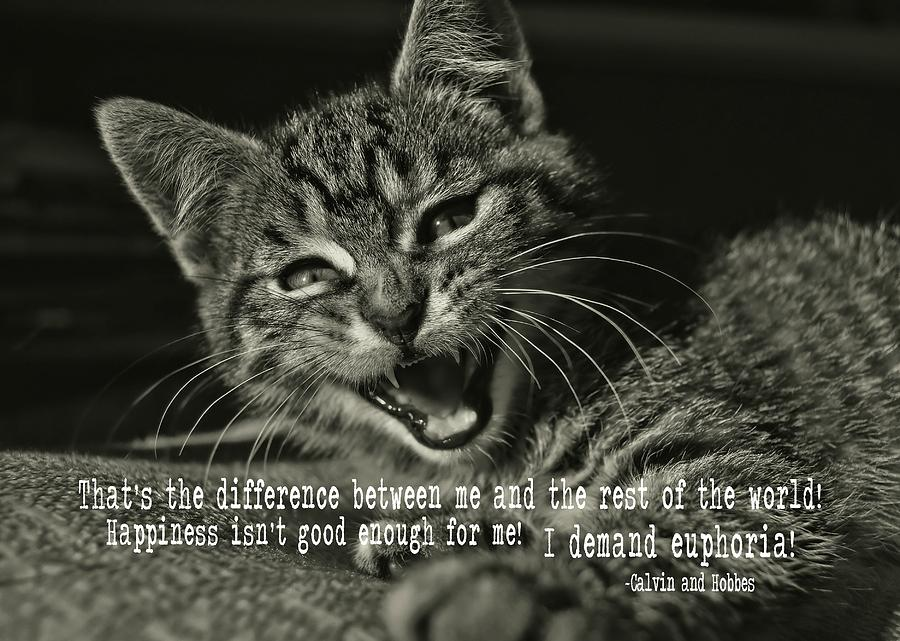 Cat Photograph - Do Not Start With Me Quote by JAMART Photography