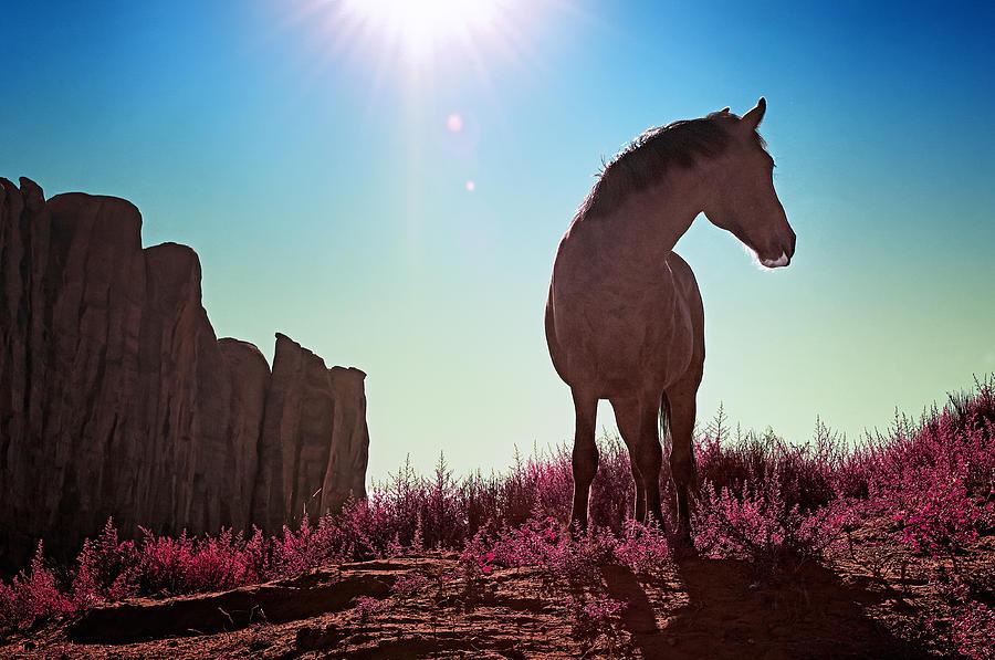 Horse Photograph - Do Not Take Photos Of Me by Radek Spanninger