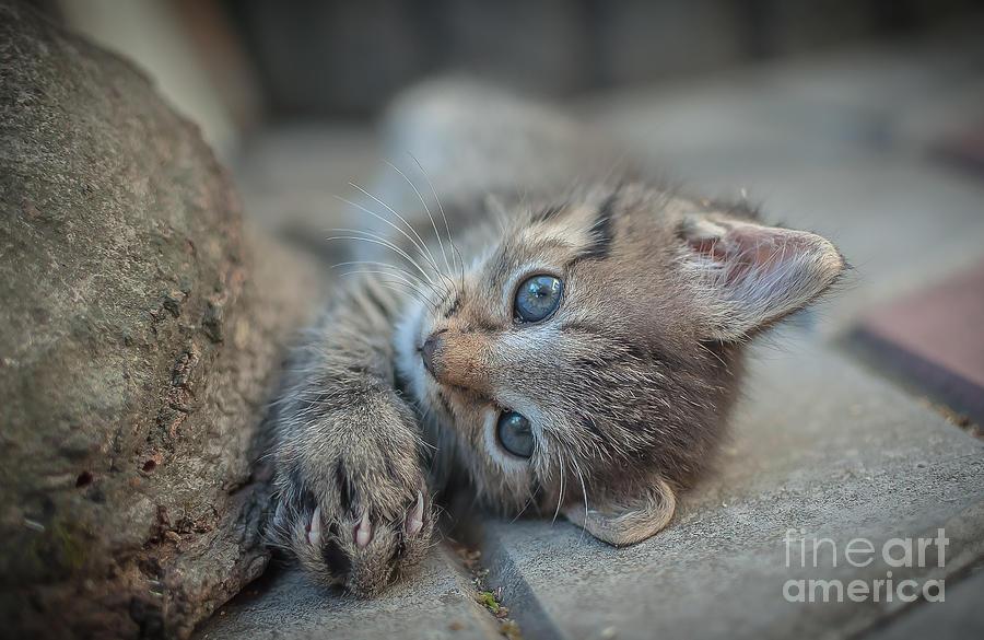 Kitten Photograph - Do You Like Me Right by Lyudmila Prokopenko