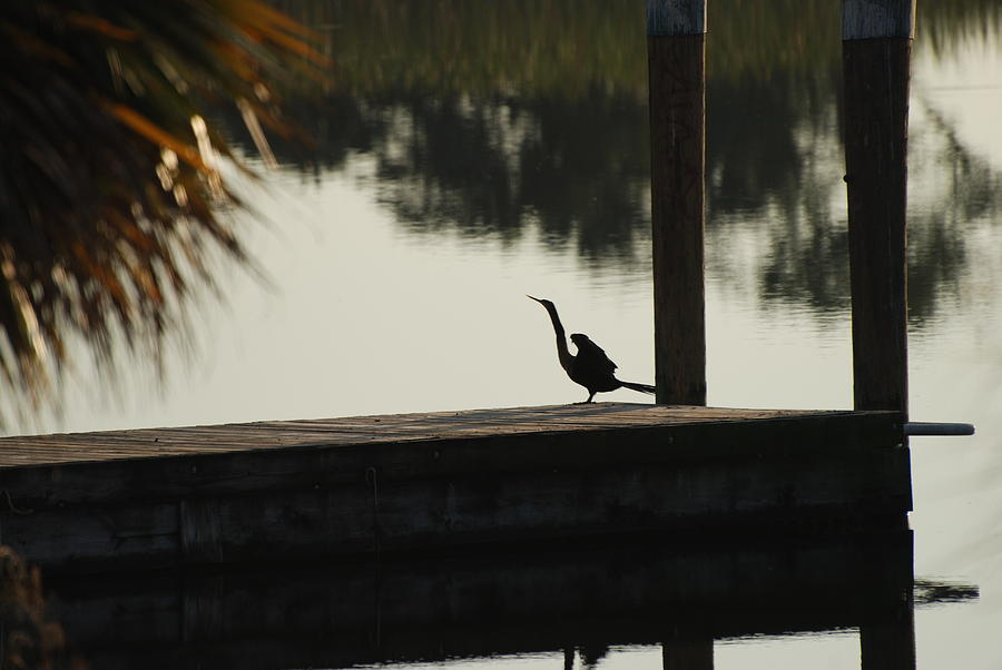 Reflections Photograph - Dock Bird In Color by Rob Hans
