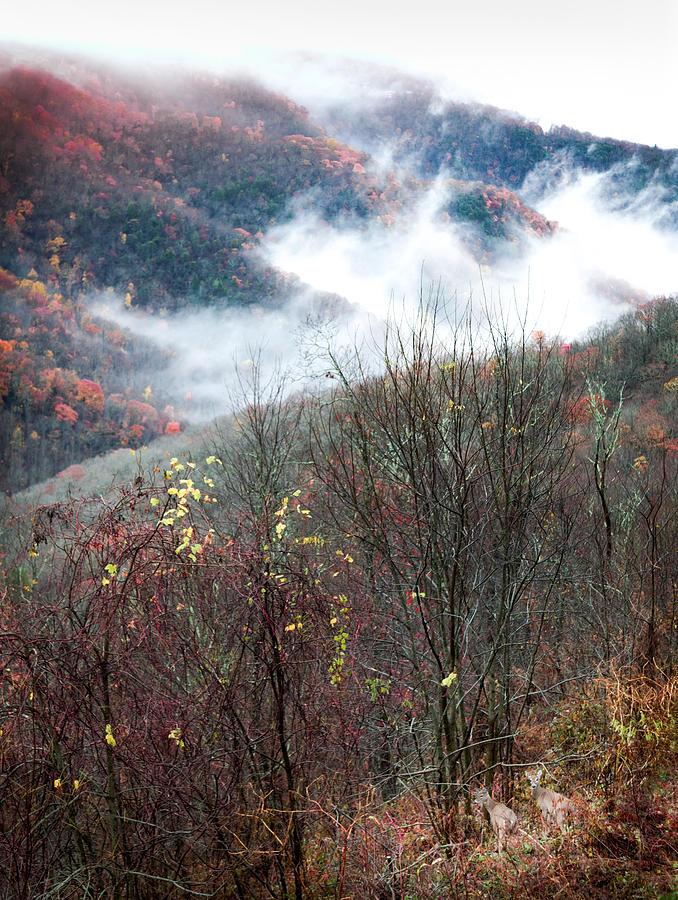 Autumn Deer Photograph - Doe On Autumn Ridge by Karen Wiles