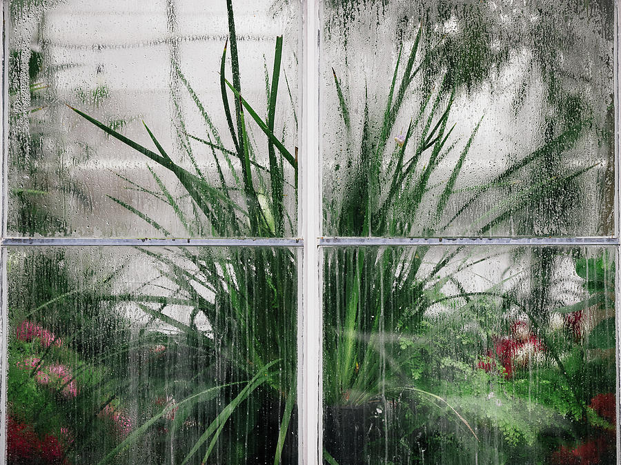 Does it Rain in the Conservatory? by Lynn Wohlers