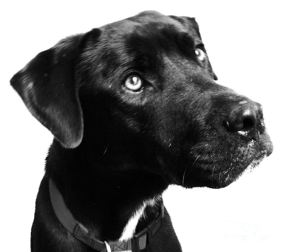 Dogs Photograph - Dog by Amanda Barcon