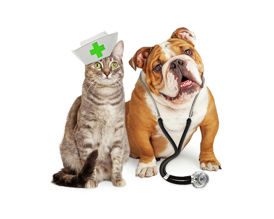Animal Photograph - Dog and Cat Veterinarian and Nurse by Susan Schmitz