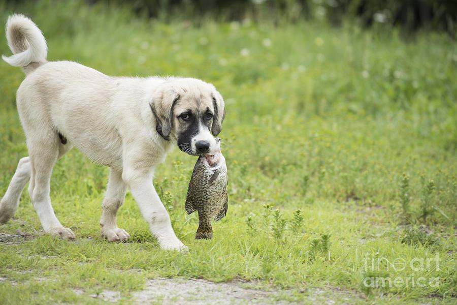 Fish Photograph - Dog Gone Fishing by Juli Scalzi