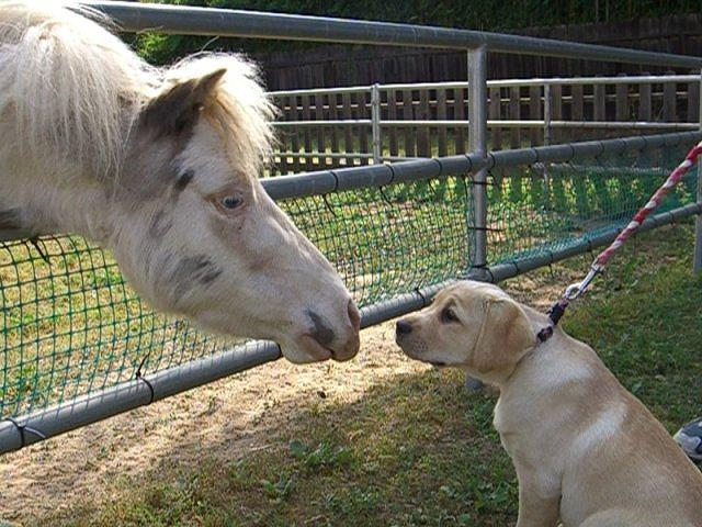 Horse Photograph - Dog And Pony by Liz Vernand