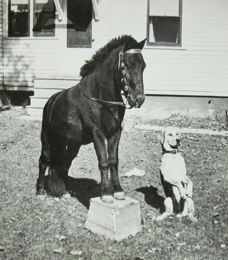 Old Fashioned Photograph - Dog And Pony Show by Krista Barth