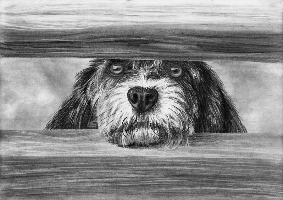 Pencil Drawing - Dog At Gate by Nolan Clark