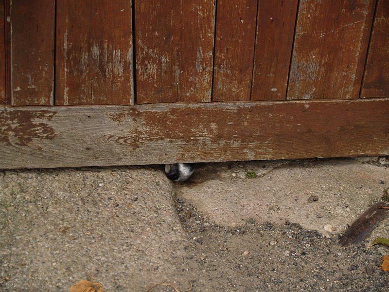 Dog Photograph - Dog At The Door by Aline Kala