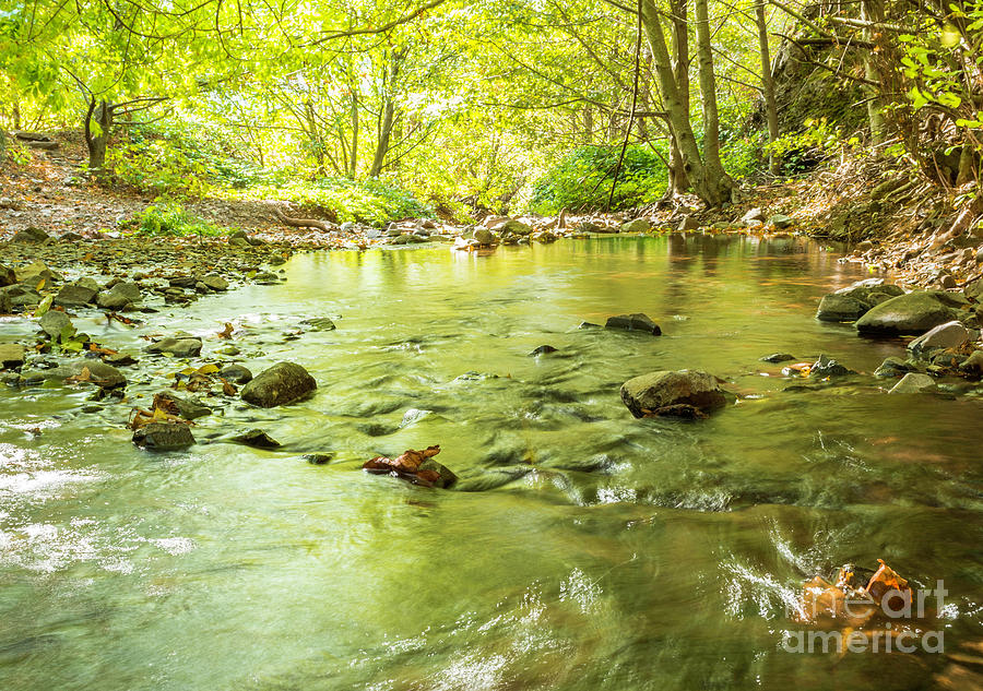 Stream Photograph - Dog Creek by Linda Steider