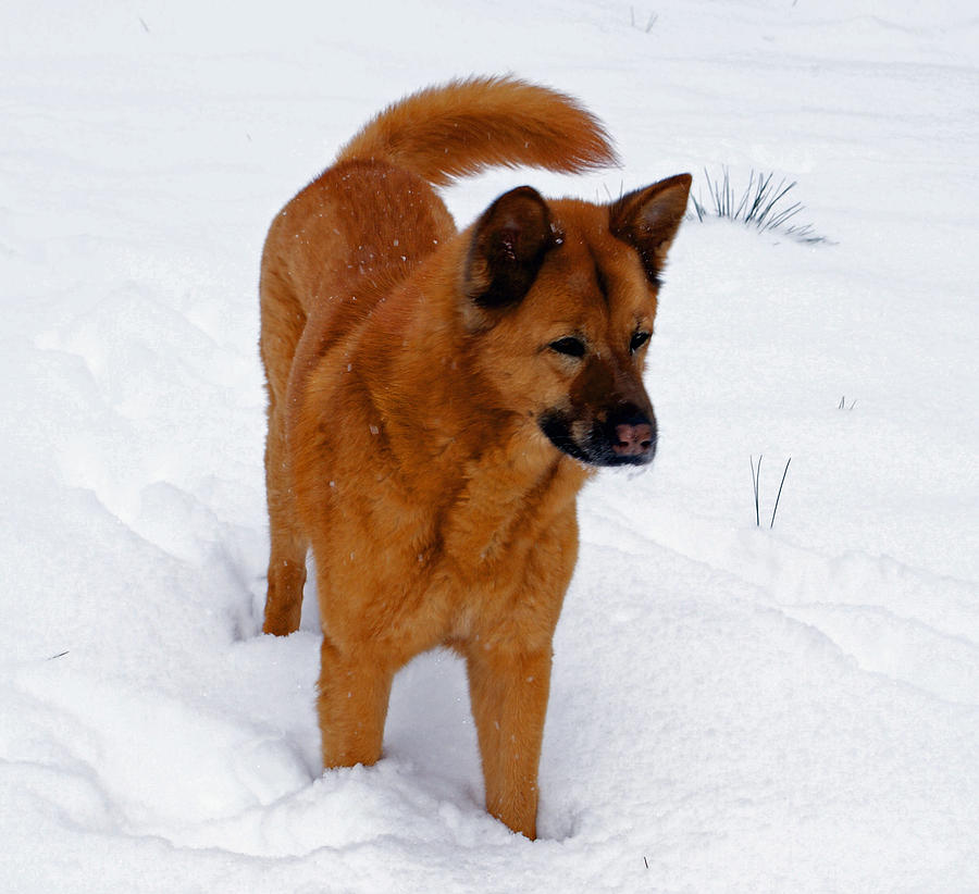 Snow Photograph - Dog Days Of Winter by Jean Haynes