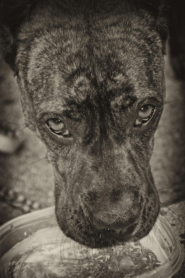 Dog Photograph - Dog Days by Off The Beaten Path Photography - Andrew Alexander