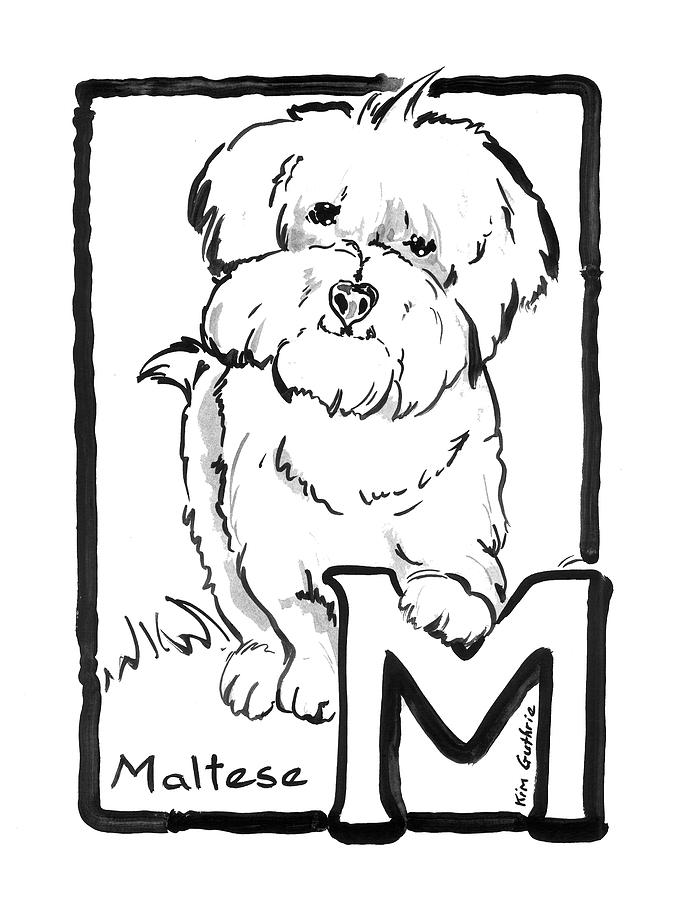Dog Drawing Maltese And The Letter M Painting By Kim Guthrie