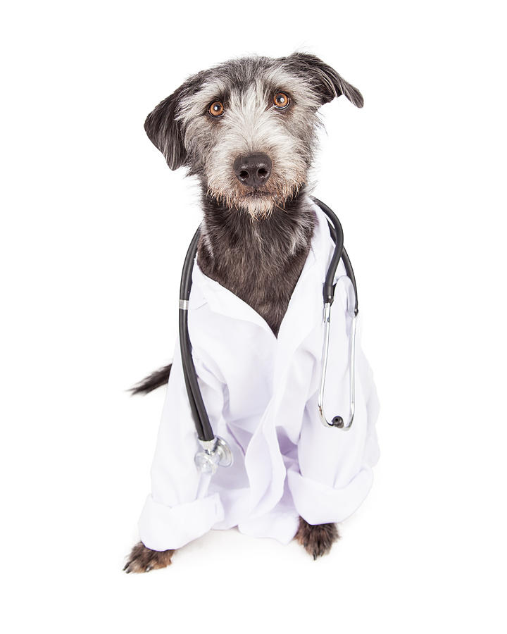 Animal Photograph - Dog Dressed As Veterinarian by Susan Schmitz