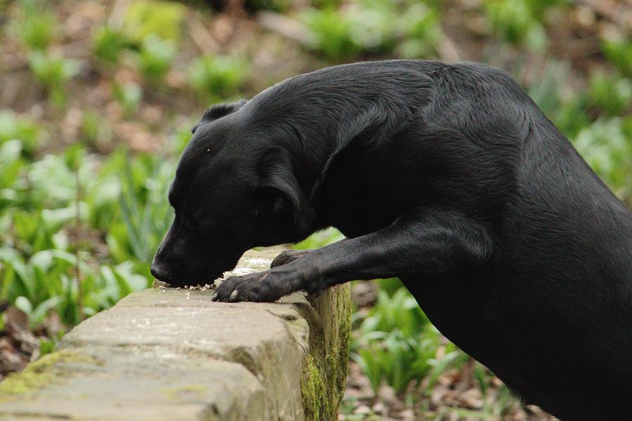 Dog Eating Bird Food by Adrian Wale