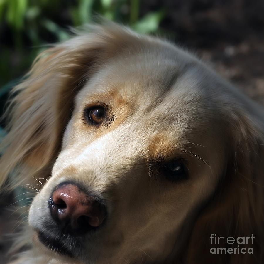 Dog Eyes Photograph