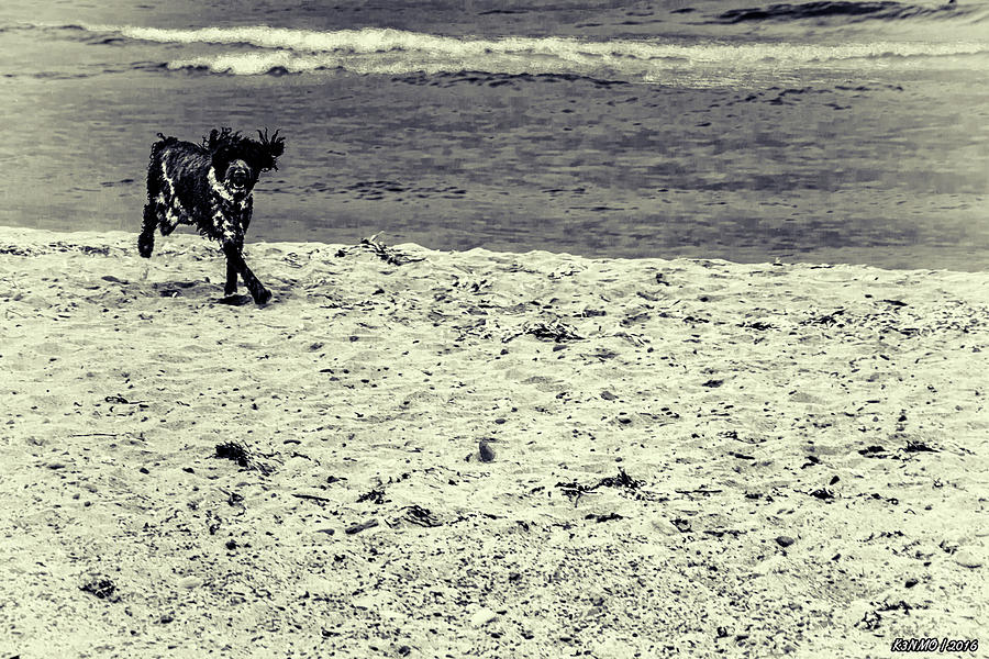 Animal Photograph - Dog Frolicking On A Beach by Ken Morris