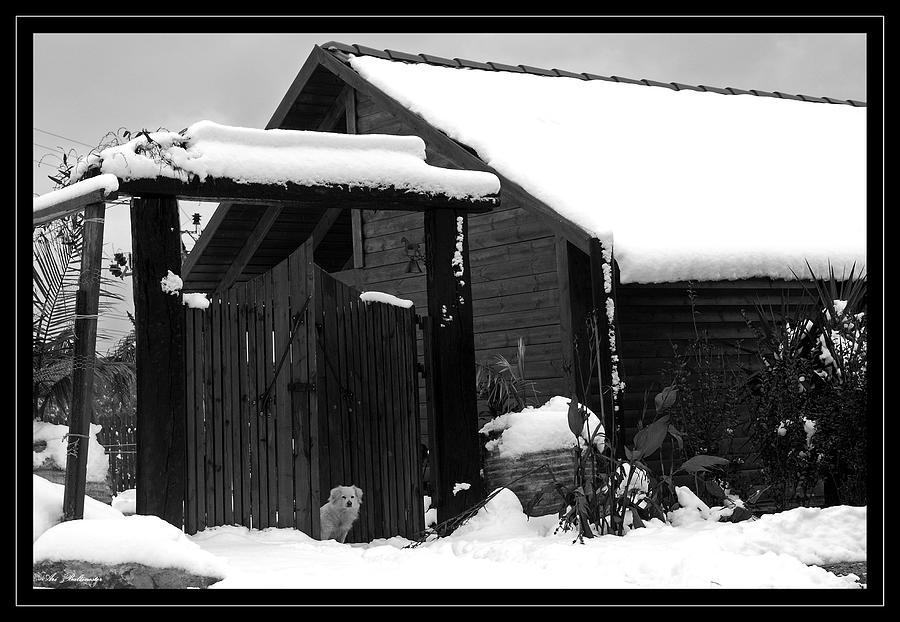 Dog Photograph - Dog In Snow by Arik Baltinester