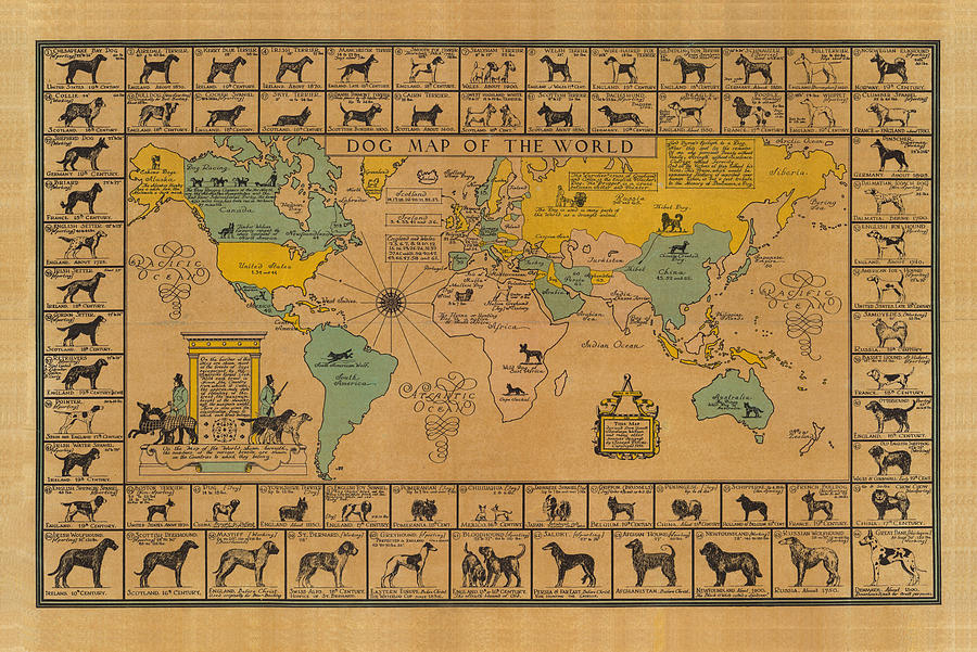 Dog Map Of The World - Breeds Of Dogs From Around The World - For Dog Lovers - Antique Chart Drawing