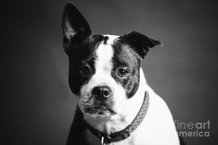 Dog - Monochrome 1 by Jesse Watrous