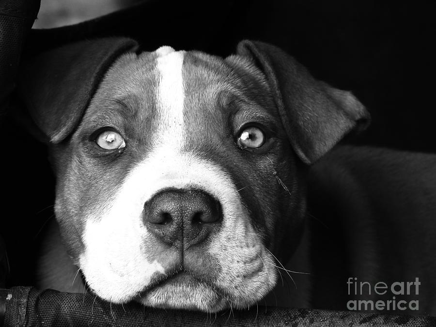 Dog - Monochrome 2 by Jesse Watrous