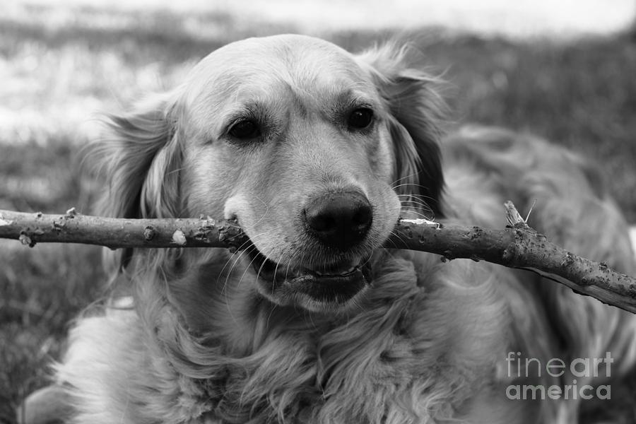 Dog - Monochrome 4 by Jesse Watrous