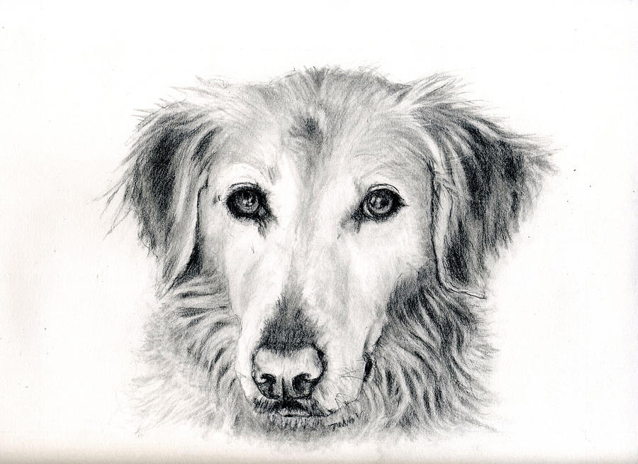 Dog Portrait by BARBARA J HART