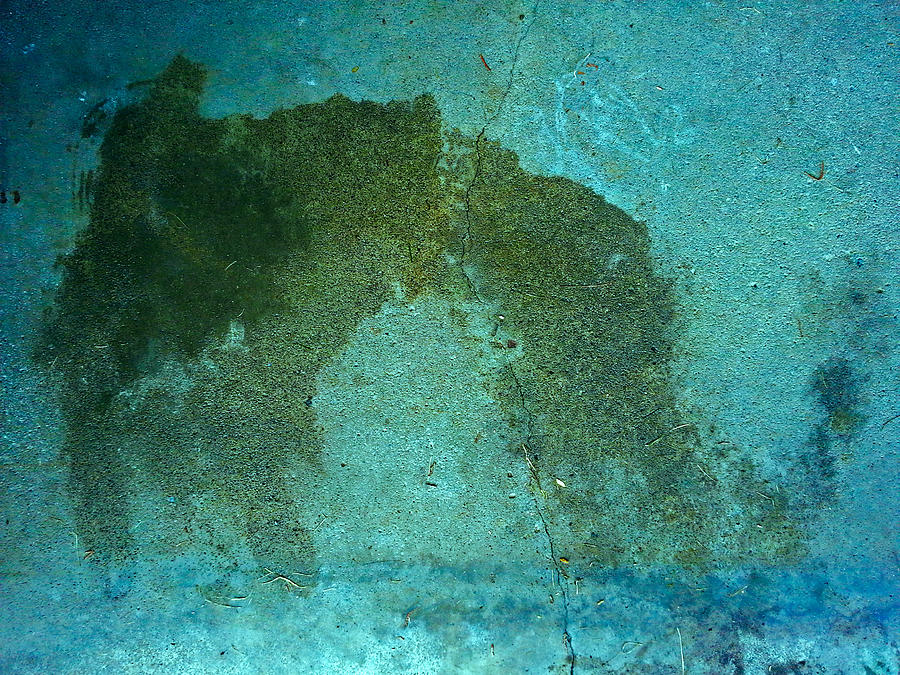 Dog Print In Blue Photograph
