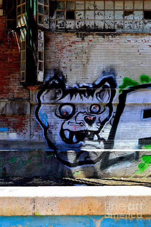 Graffiti Photograph - Dog River          Graffiti  by Urban Artful