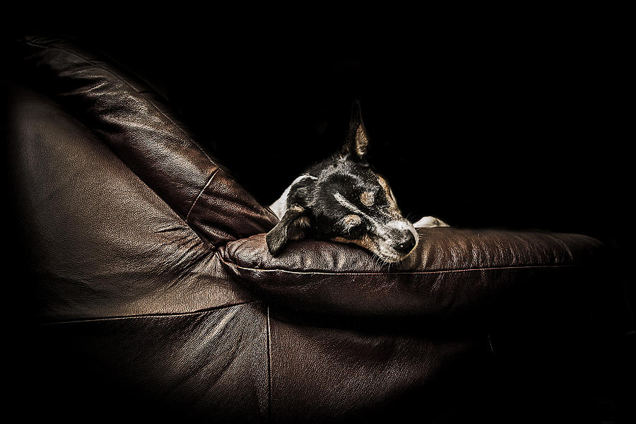 Dog Photograph - Dog Tired by Paul Neville